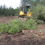 Clearing brush for a 7 acre recreation and fishing lake.