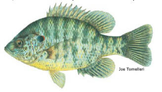 Undesirable fish for texas lakes soilmovers llc for Fish stocking texas